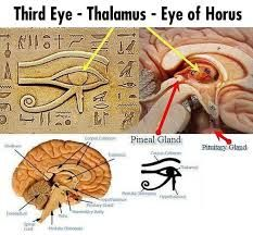 """Our ancestors did not MERELY put these SACRED and SYMBOLIC images on their statues and artifacts for SHOW...Each and every one, has a SPECIAL and SIGNIFICANT meaning... The PINEAL GLAND is REAL and it was represented by our ancestors through their depiction of the """"3rd Eye"""""""
