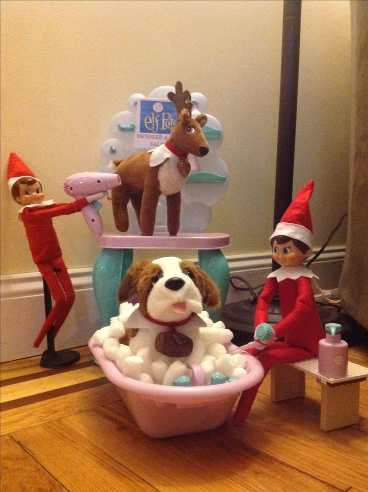 Elf Pet reindeer and dog salon