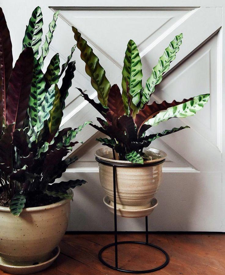 3 växter som spås bli trendiga i höst | ELLE Decoration