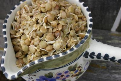 Today Erin shares three amazing dishes created around sprouted lentils. MMM... my favorite sprout all dressed up. She's really a genius in the kitchen, and I'm so thankful for her generosity to share her artistry with us!
