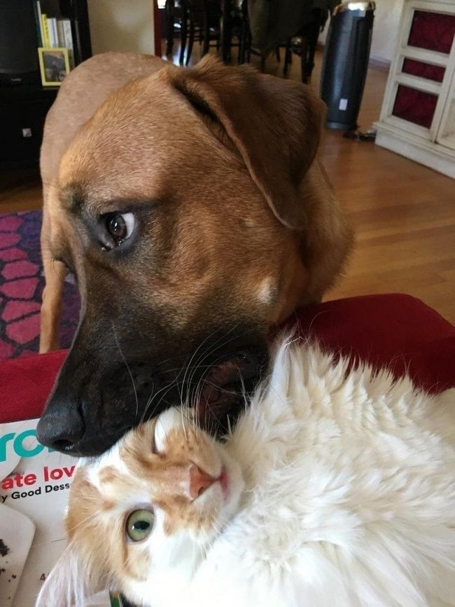 Смешные картинки кота и собаки