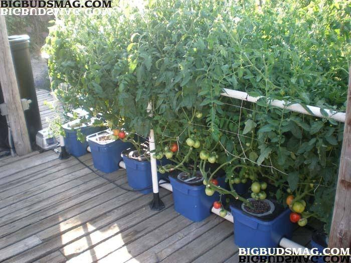 81 best images about gardening on pinterest gardens for Hydroponic grow bed