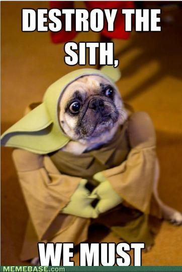 Yoda in real life! #GeekFun: Yoda Pug, Animals, Funny Things, Dogs, Star Wars, Funny Stuff, Funnies, Pugs, Starwars