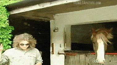 Rock on horse. You gotta' see this video!! https://www.facebook.com/video.php?v=10152745355181810 It wont let me pin it! If you like this gif, you will LOVE this video!!!