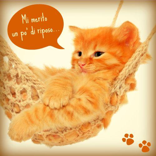 Chi aspetta il weekend come questo gattino rosso?
