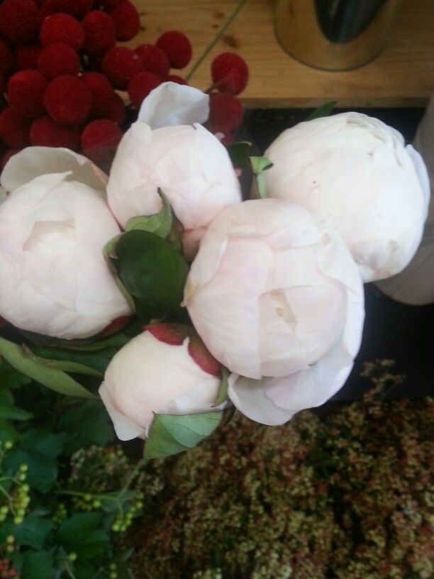 Ohhhh this is devine White Peony flowers, 'you just have to smell them the perfume is so nice the words can't explain'