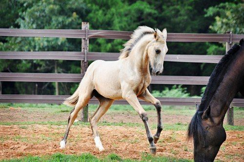 gorgeous foal