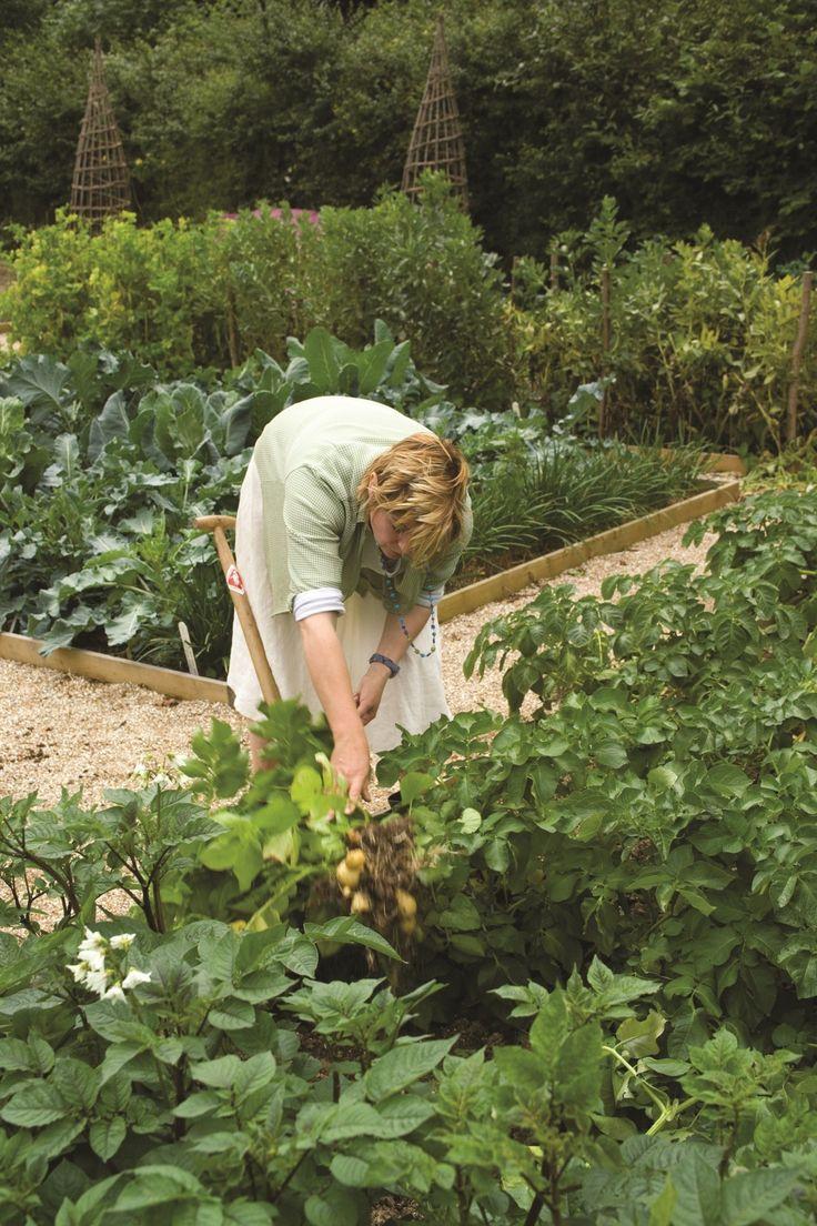 Starting a vegetable garden from scratch gardens for Starting a vegetable garden