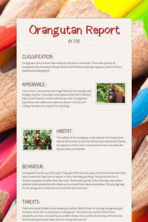 Orangutan Report by Joe