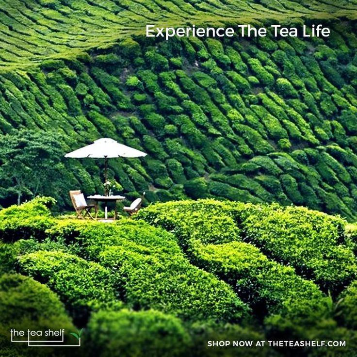 What's better than sipping a blissful cup of tea while basking yourself in the cozy sun, amidst the tea plantations? Get a whiff of tea in the air and enjoy the tea life the right way! Here are the list of tea gardens you would want to visit if incase a tea lover.