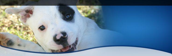 Animal Welfare League NSW | Valentine's Day - Pet Speed Dating
