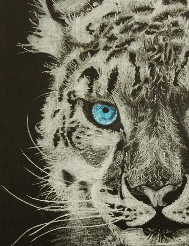 levhart snezny (panthera uncia) neboli irbis :-) by Adisida on DeviantArt