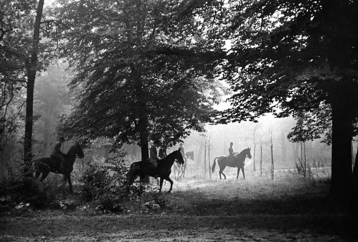 Atelier Robert Doisneau | Robert Doisneau's photo archives. - Horses