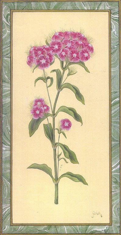 """""""Dianthus Barbatus"""" by Gulcin Anmac."""