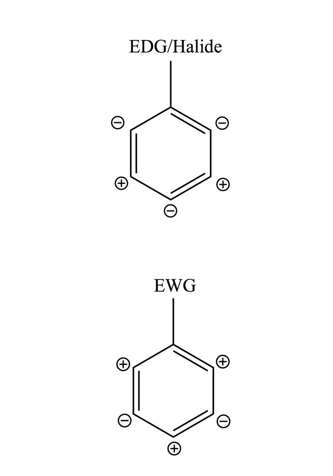 It helps me to think of  EAS (electrophilic aromatic substitution) groups like this. The charges listed are not really there-the carbons are not actually fully charged, the charge labels are there to illustrate areas of low electron density (+) and areas of high electron density (-). Recall that nucleophiles go for the (+) areas. This is why groups direct.  Electron donating groups=EDG Electron withdrawing groups=EWG Halides are technically EWG, but they act as ortho/para directors anyways.