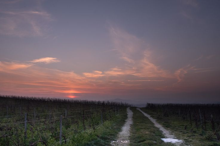 Sunset in Champagne