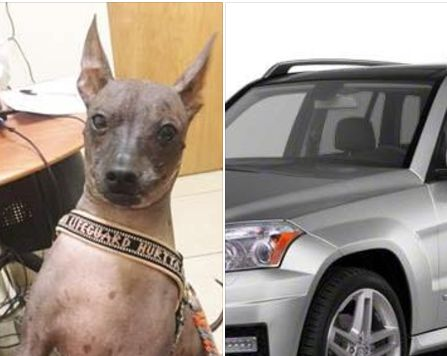 "The fate of a dog, who vanished after an opportunistic thief stole a car in Palm Beach County, Florida, remains unknown. On Thursday morning, the Palm Beach County Sheriff's Office utilized social media to get the word out about the stolen dog. A Facebook post about the dog-napping victim reads: ""My name is SCOOBY and I …"