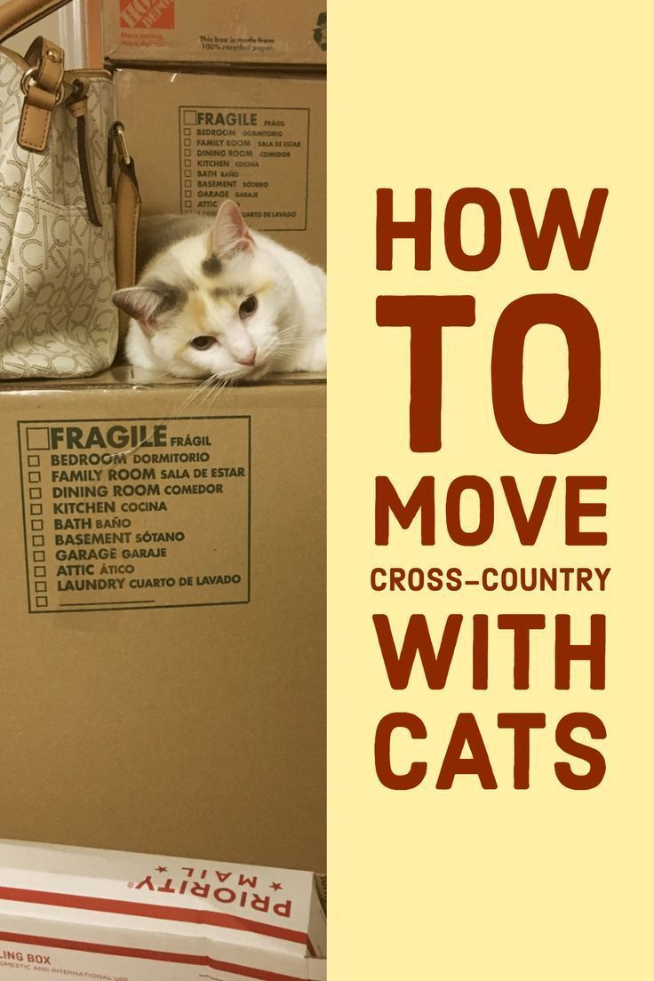 Traveling With Cats In Car Moving Cross Country With Cats Can Be Stressful For Both You And Your Cats Here Are Some Moving Cross Country Cat Travel Mama Cat