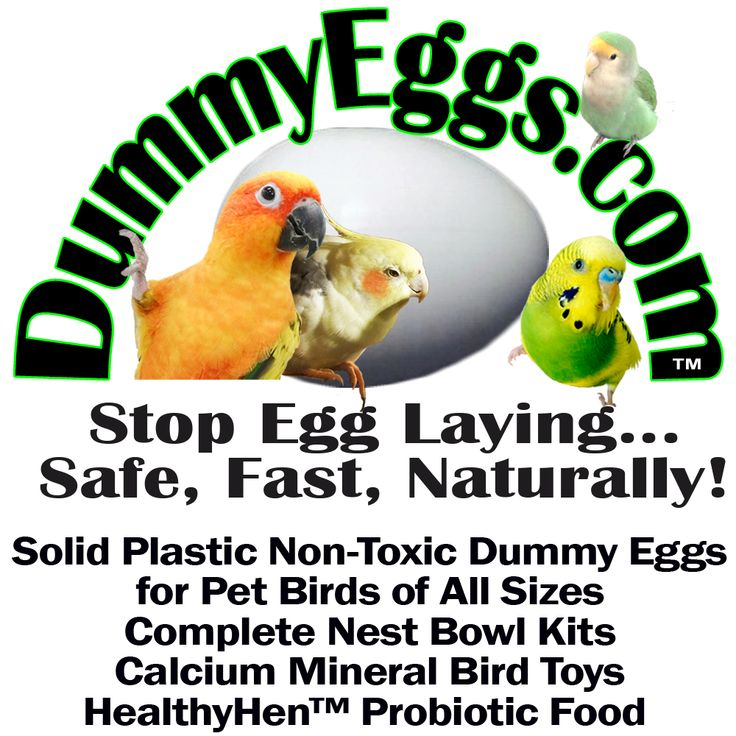 DUMMY EGGS IN ALL SIZES. EXCLUSIVELY DESIGNED AND MANUFACTURED IN THE US http://dummyeggs.com Find all sizes of solid plastic dummy eggs to control egg laying in your pet bird. Plus great free information to help you use fake eggs.  Stop Egg Laying in Pet Birds Safely, Fast, Naturally. DummyEggs.com