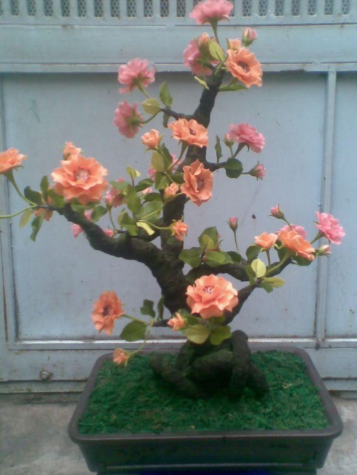 roseira bonsai