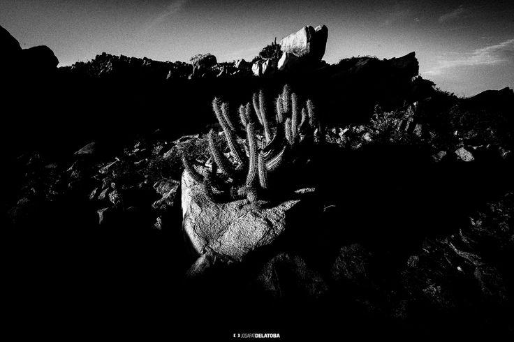 Desert in black & White #josafatdelatoba #cabophotographer #loscabos #bajacaliforniasur #blackandwhite #desert