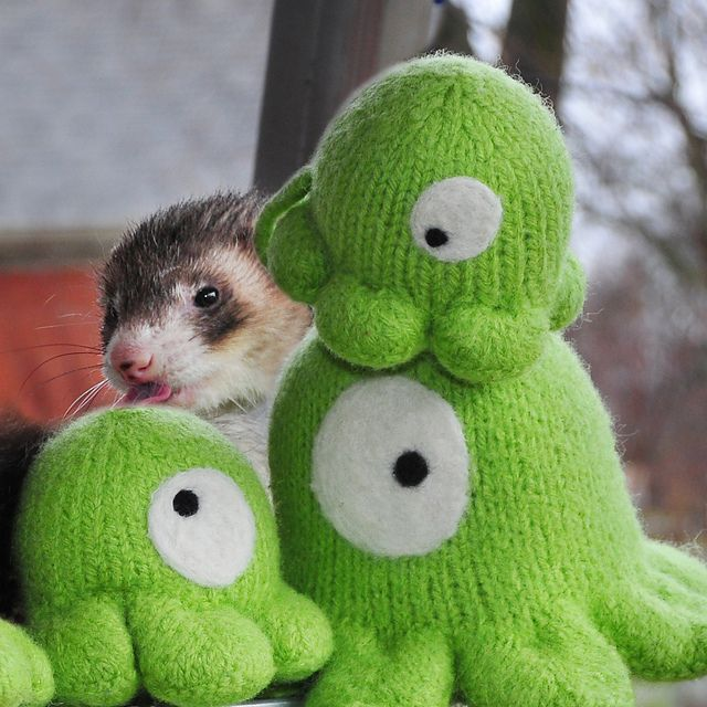 Ravelry: My Little Slug pattern by Selina S