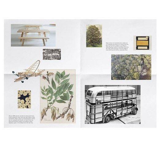 Mock up of a bit of print #design looking at memories and narratives around The Ash Tree #TheAshProject