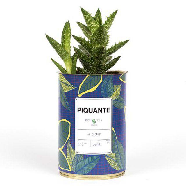 Un cactus rigolo à moins de 50 euros, Ay Cactus