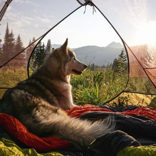 panduhbear: boredpanda: I Take My Wolfdog On Epic Adventures Because I Hate To See Dogs Locked Away ❤️