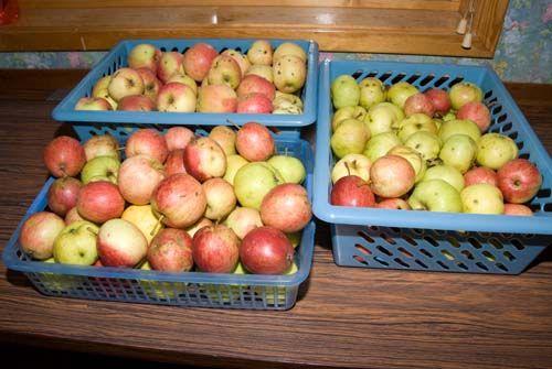Sappan - stap voor stap handleiding voor het maken van appelsap met de sappan
