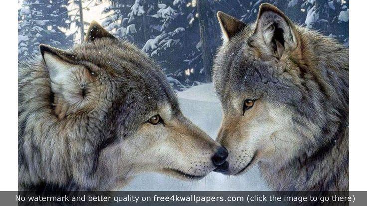 Wolf Encounter Romance wallpaper