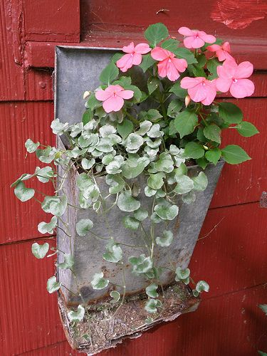 old chicken feeder plant container .. repurposed