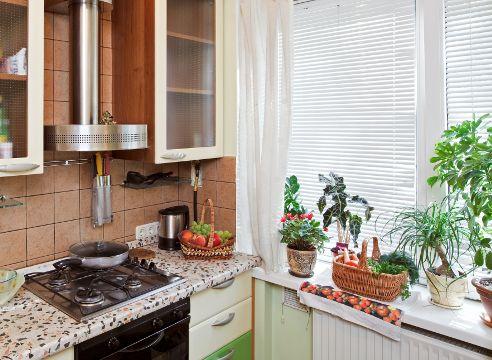 Комнатные растения на кухне - как выбрать и посадить