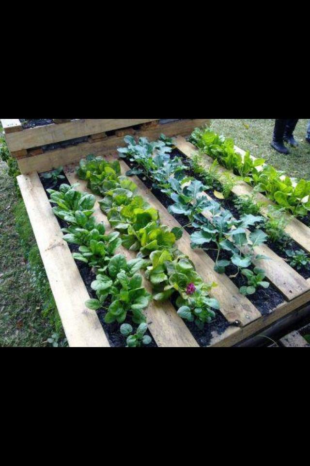 Pallet patch Unique vegie patch/herb patch