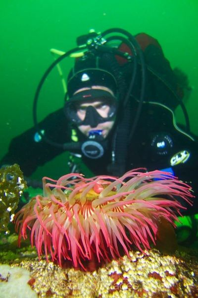 A beautiful anemone in some current off of Vancouver Island.