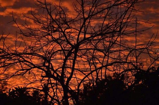 Desde el patio de mi casa en Puente Alto.