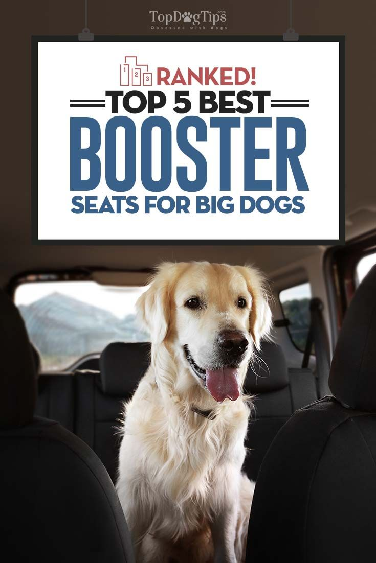 The Best Large Dog Booster Seats