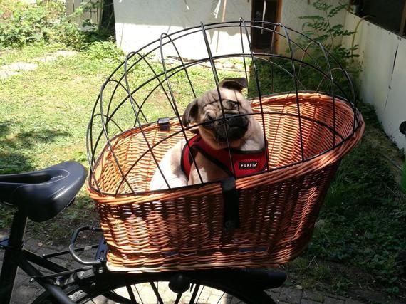 Xxl Gepacktragerkorb Hundefahrradkorb Fahrradkorb Hundekorb Hundetransporter Mit Gitter Bicycle Basket For Dogs Cat With Grid Dog Bike Basket Biking With Dog Dog Basket
