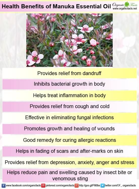 Manuka essential oil- a relatively new discovery. Many benefits, click to see more...