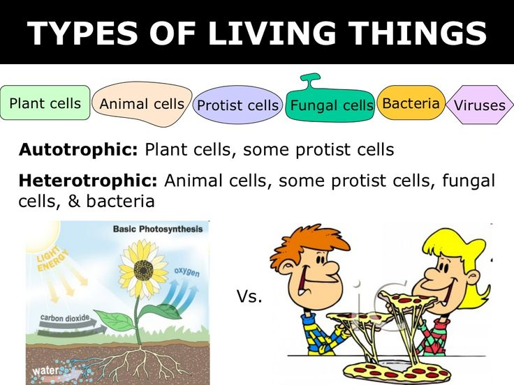 84 best images about 6th grade science on Pinterest ...