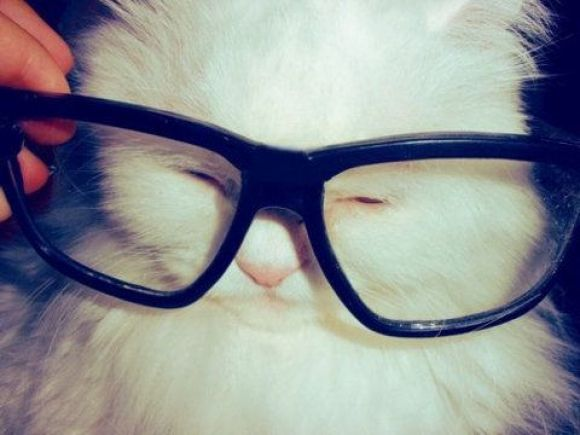 Hipster Kitty | Cutest Paw: Hipster Cat, Cute Animal, Kitty Cat, Cool Cat, Smarty Pants, Chemistry Cat, Pet Cat, Hello Kitty, Eye