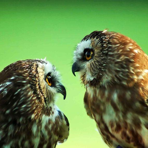 Owls . . .Elinay Nature Photography