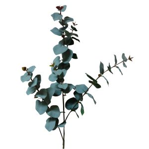 Eucalyptus - it is a much softer grey in real life