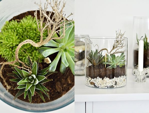 This is a great Idea for a terrarium!  You could always use jars, too.