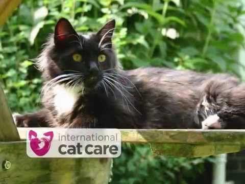 Worldwide Giveaway: Cat Christmas Cards & International Cat Care Conference | Katzenworld