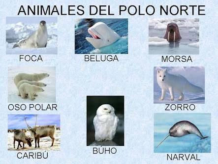 Resultado de imagen de el polo norte para niños