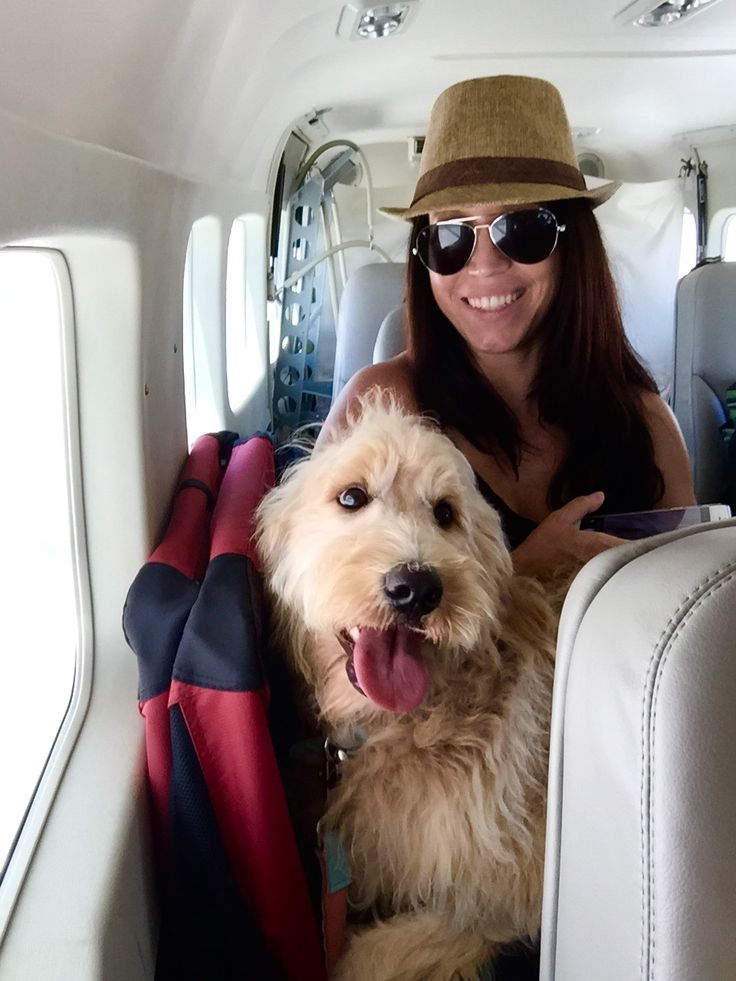 Fly In Style  Getting to various private islands, such as Kamalame Cay, Bahamas, is as easy as pie with charter flights running from Fort Lauderdale Executive Airport (FXE) direct to Andros Town (ASD) on Andros Island. Fly via a 9-seat Cessna Caravan aircraft with your pup in your lap (that's right – no cargo, no carrier). The one hour flight is approximately $600 per person round trip.
