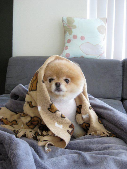 Khloe-Kardashian-Boo-the-Dog-Facebook-10261055.jpg