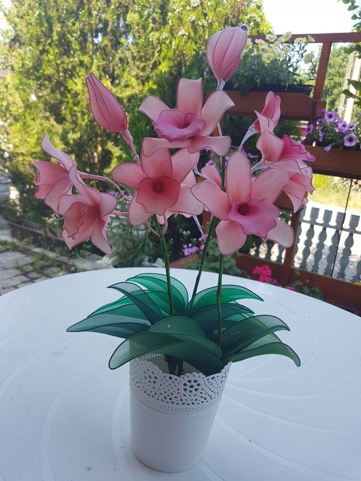 Orchidea - orchid