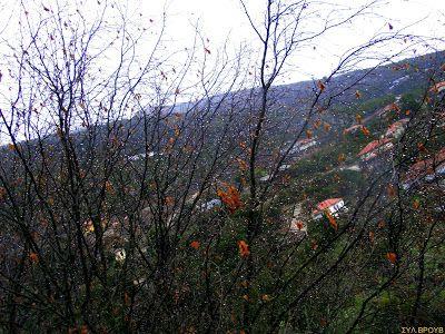 χωριό ζωή στη φύση: χειμώνας στον ορεινό βάλτο !!